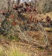 California Garden and native plants