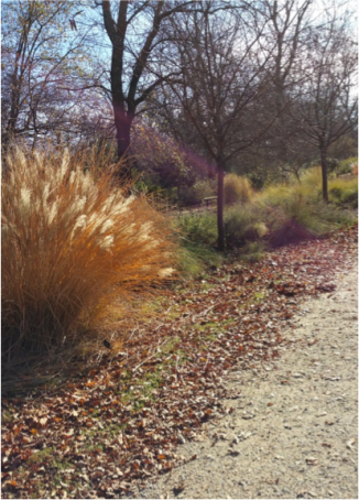 Path from Children's Garden to Butterfly Garden