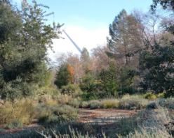 Mediterranean Basin Garden
