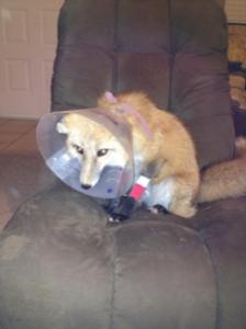 Loki recovery