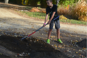 A young volunteer helping to rake out soil in our Wildflower Meadows.